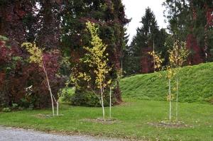 Tanzenden Bäume, 1997/2010 von Timm Ulrich Foto: Christa Linossi